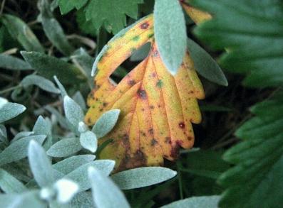 le premier mouvement de l'automne,saisons,ritournelle,septembre,feuilles,effeuillement,couleurs,forêt,arbre,alceste,ermitage,balade,li po,nonchalance,vent,jaune,ocre,rouge,roux,mélancolie,exils,presque