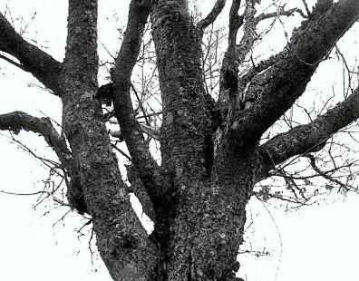 légende d'automne,by paul,contes et légendes imaginaires,peaux rouges,défi,vengeance,humains,humiliation,réparation,martres,castors,arbres,paysages lointains,orgueil