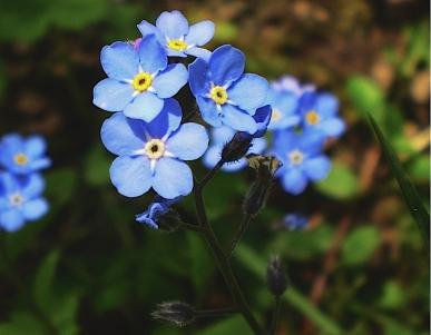 blue f j.jpg