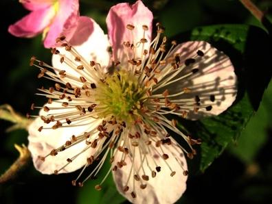 flower043.JPG