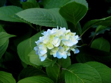 flower-power-2.jpg