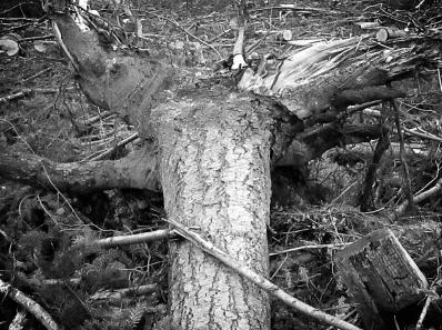 corps arbre.jpg