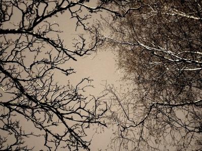 arbres cieux ctrst - copie.jpg
