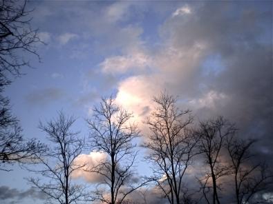 fin arbres.JPG
