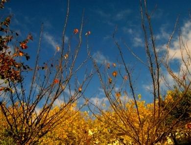 ciel plants2.jpg