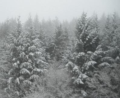 pays de neige b.jpg