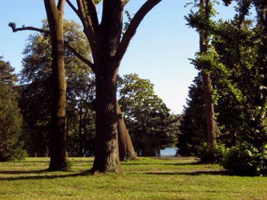 parc-arbres.jpg