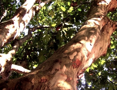arbre2w.jpg