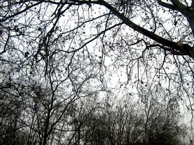 forêt morand.JPG