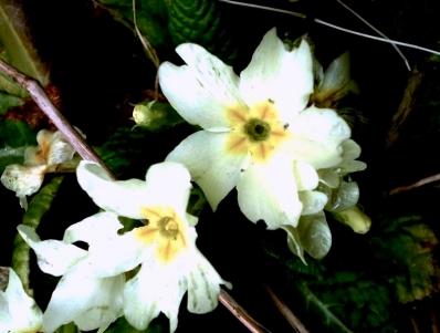 fleurt.JPG