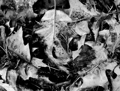 le murmure des forêts,jean giono,le chant du monde,photographie,forêt,noir et blanc,nabirosina,balade,errance,esquisses,imaginaire,feuilles mortes,hiver,souffle,murmures,solitude,silence,recueillir,bruissements,bois,ailleurs