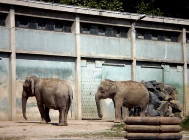 2-elephants.jpg
