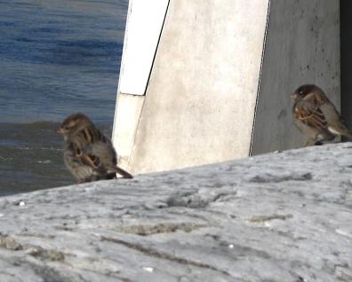 oiseaux0037.JPG