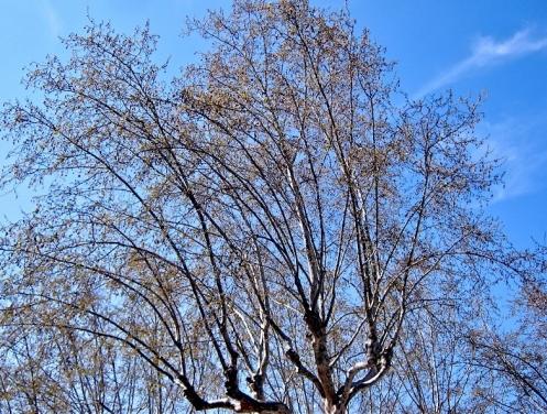 tree mars.jpg