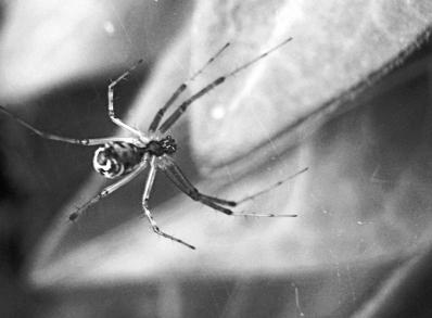 araignée z.jpg
