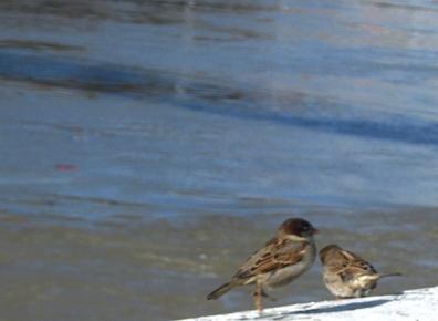oiseaux_0035.JPG