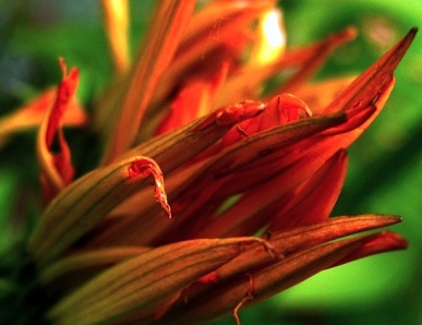 red flower0200.JPG