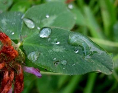 après la pluie.jpg