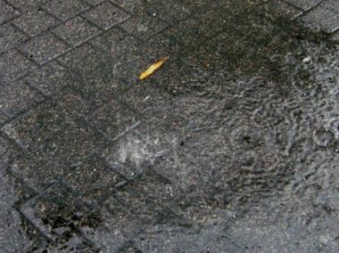 pluie-feuille.jpg