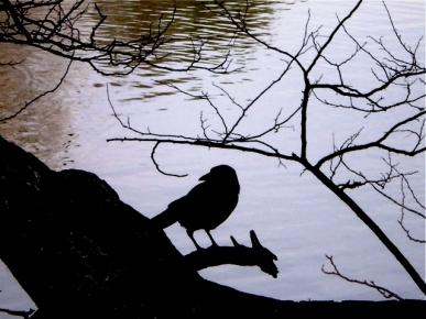 oiseau au parc.jpg