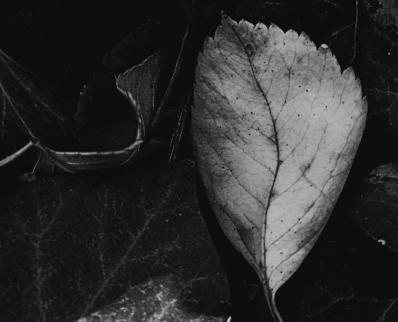 feuilles nbv.jpg