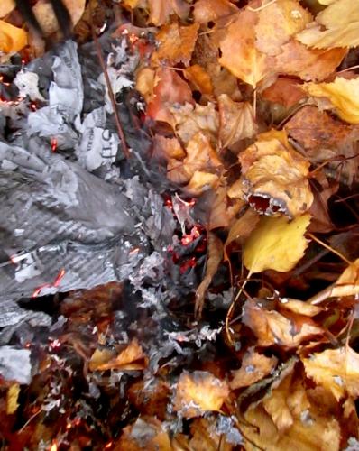 le roux à l'intérieur,automne,novembre,actualité,la vie des écureuils,saisons,couleurs,lumière,zoom,nature,balades,mallarmé,ballades