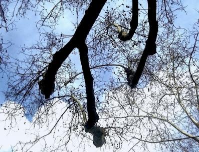 TREE76.JPG