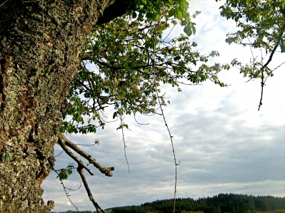 tree41.JPG