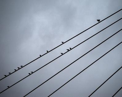 tous les oiseaux  B.jpg