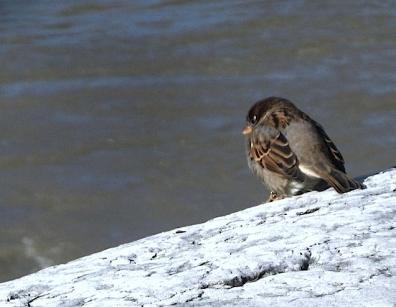 oiseaux_0038.JPG